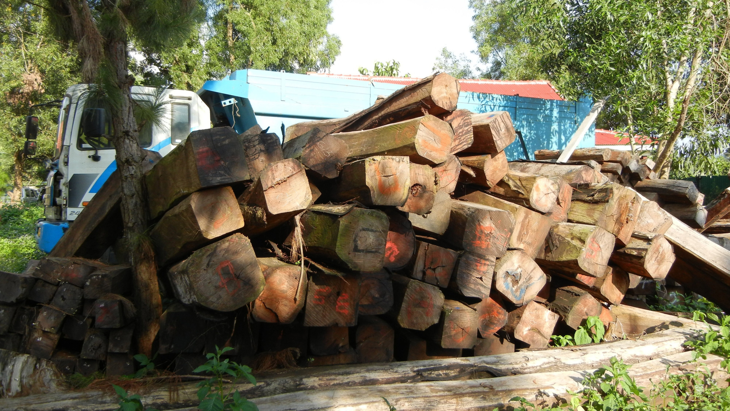 Confiscated rosewood at the Forest Administration office in Senmonoron, Mondulkiri. Credit: Patricia Foster-Turley