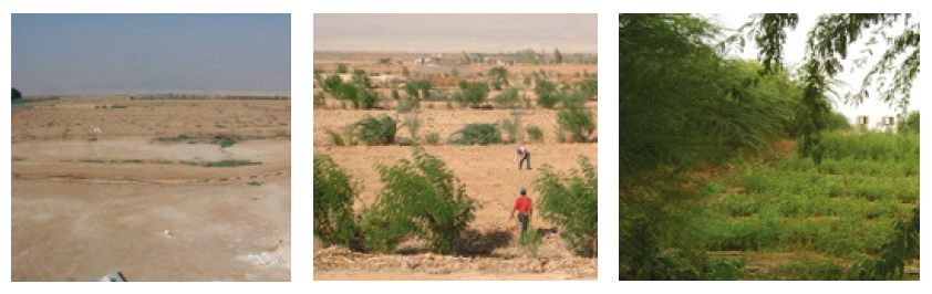 The Jordan Valley Permaculture Pilot Project, before and after pictures of when the project began, six months later, and three years later (2003(