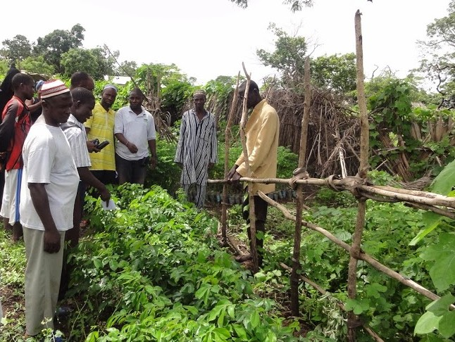 Community members in garden plot, established through agricultural intensification activities of STEWARD.